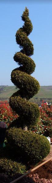 Zypresse Garten-und-Landschaftsbau Gärtnerei Bock