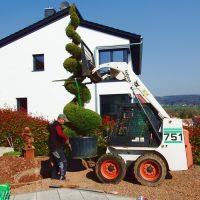 Garten und Landschaftsbau Zipresse
