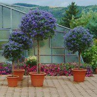 Floristik Küberlpflanzen Gärtnerei Bock