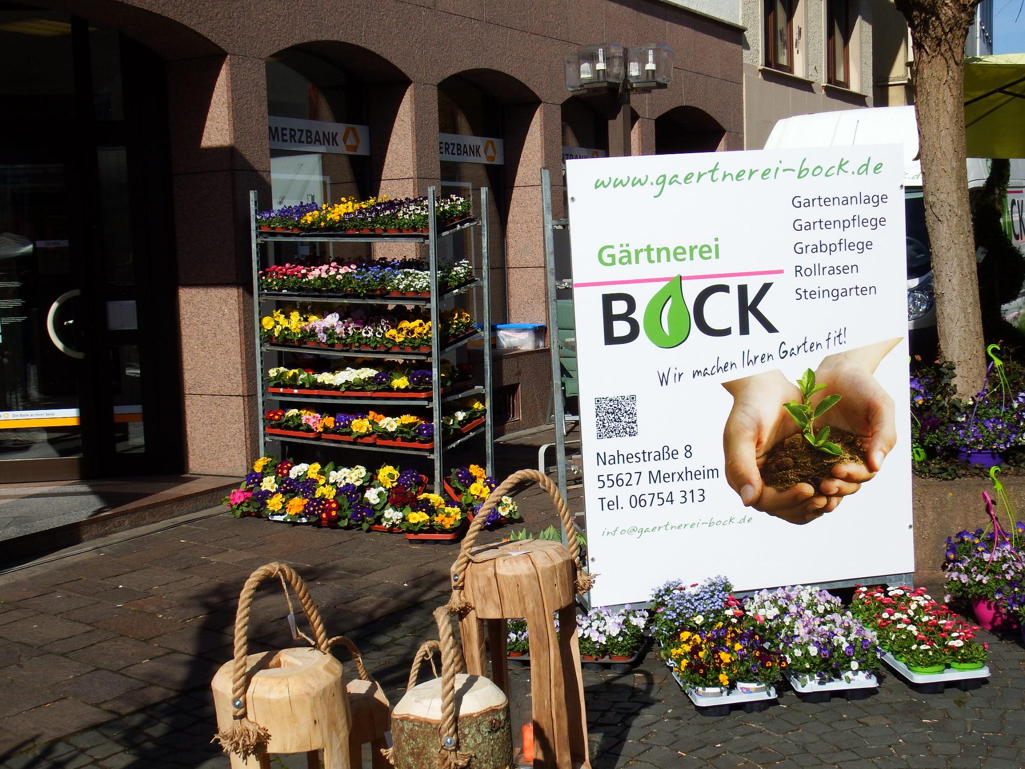 Frühlingserwachen - Angebot Gärtnerei Bock