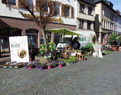 Galabau - Kirn - Gärtnerei Bock - Bad Sobernheim