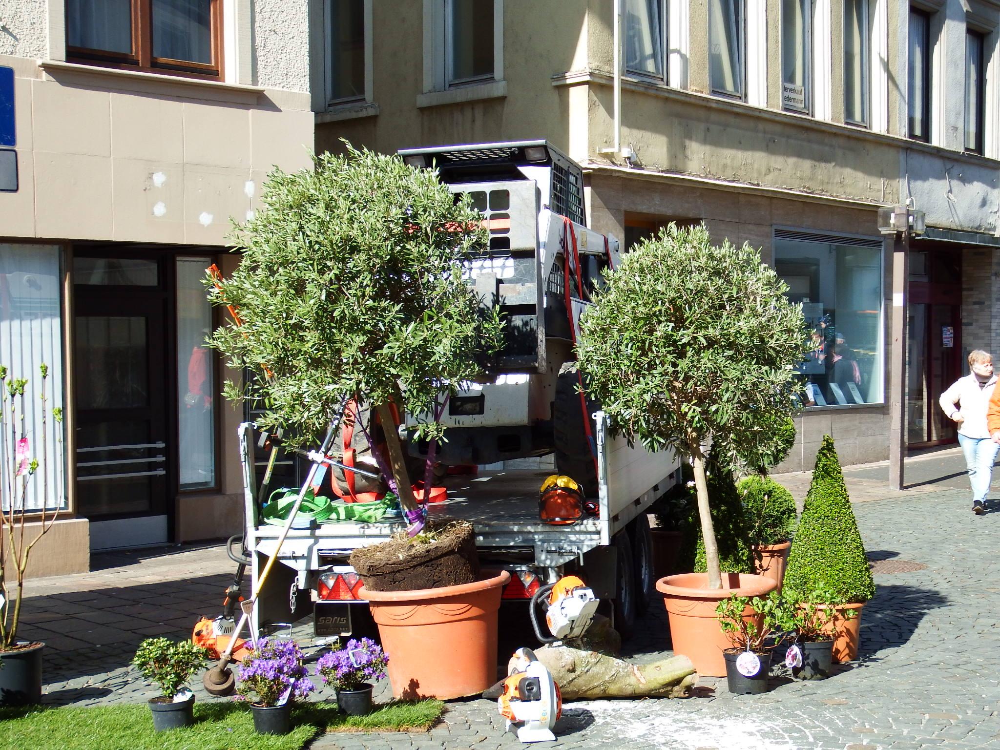 FRÜHLINGSERWACHEN IN KIRN - Galabau - Garten - Neuanlage - Gartenbau - Gartenanlage - Bad Kreuznach - Gärtnerei Bock - Kirn - Bad Sobernheim - Meisenheim - Bingen - Idar-Oberstein - Birkenfeld