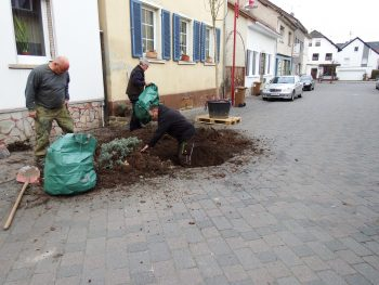 Straßenbaum - Aushub Erde - Baumpflanzung