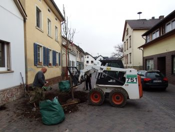Baumpflanzung - Gärtnerei Bock - Kirn - Bad Sobernheim - Bad Kreuznach - Bad Münster am Stein - Simmern - Bingen - Ingelheim - Meisenheim - Idar-Oberstein - Birkenfeld