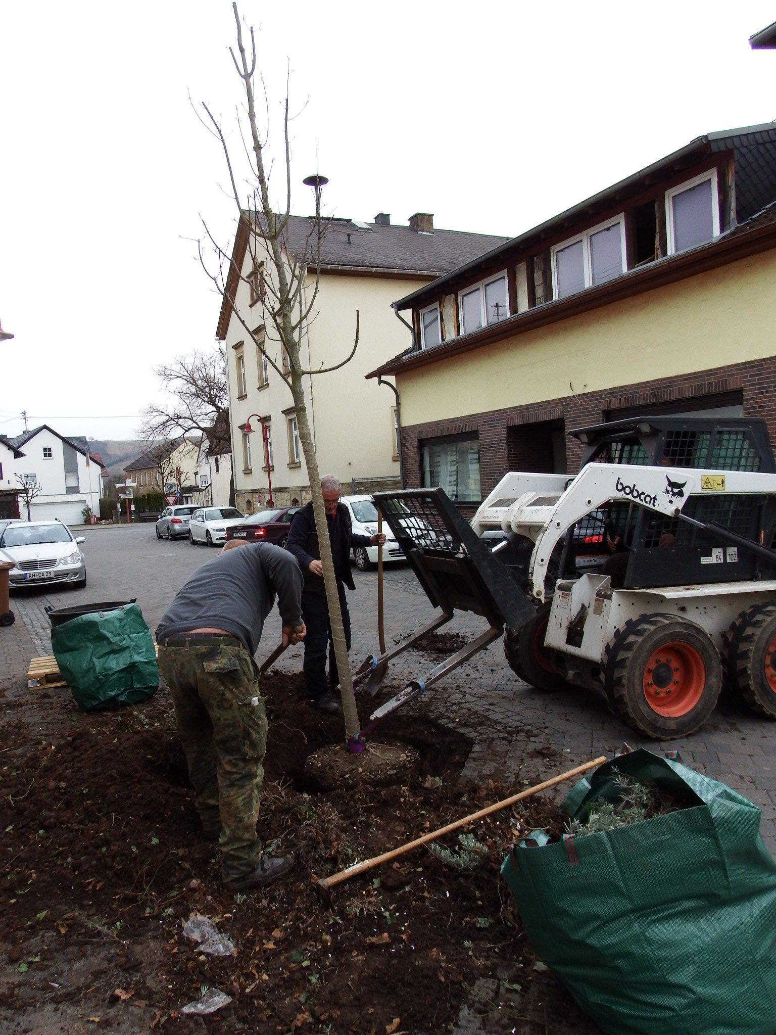 Straßenbaum - Baumpflege - Baumpflanzung - Gärtnerei Bock - Galabau -Merxheim - Meddersheim - Monzingen - Simmertal - Hochstetten-Dhaun - Kirn - Bad Sobernheim - Staudernheim - Odernheim - Kirschroth - Meisenheim - Gemünden - Bad Kreuznach - Idar-Oberstein - Birkenfeld