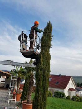 Rückschnitt - Baum - Strauch - Baumschnitt - Gartenpflege - Bad Sobernheim - Kirn - Merxheim - Monzingen - Simmertal -Kirn - Hochstetten-Dhaun - Staudernheim - Odernheim - Bad Kreuznach - Bad Münster - Meisenheim - Gemünden - Idar-Oberstein