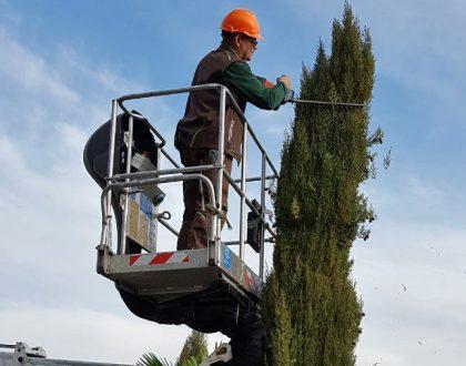 Baumpflege - Baum - Garten - Galabau - Gartenbau - Bad Sobernheim - Kirn - Merxheim - Staudernheim - Odernheim - Bad Kreuznach - Bad Münster - Meisenheim - Lauterecken - Idar-Oberstein - Kirn - Gemünden - Monzingen - Kirchberg