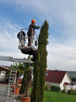 Baumschnitt - Baum - Baumpflege - Gartenpflege - Bad Sobernheim - Kirn - Merxheim - Monzingen - Meddersheim - Simmertal - Hochstetten-Dhaun - Staudernheim - Odernheim - Bad Kreuznach - Meisenheim - Bad Münster - Roxheim - Hargesheim - Lauterecken - Gemünden - Kirchberg - Simmern