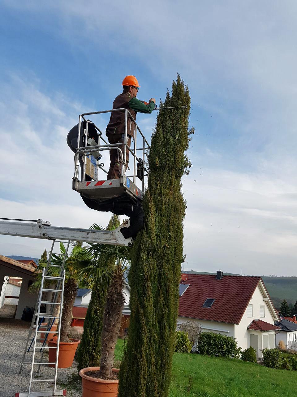 Gartenpflege - Baumschnitt - Rückschnitt - Strauch - Baum - Kirn - Merxheim - Hochstetten-Dhaun - Monzingen Staudernheim - Odernheim - Bad Sobernheim - Bad Kreuznach - Bad Münster - Meisenheim - Lauterecken - Gemünden - Simmertal - Idar-Oberstein
