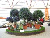 Bundesgartenschau - Gärtnerei Bock - Kübelpflanzenüberwinterung - Überwinterung - Pflanzen - Prämierte Pflanzen